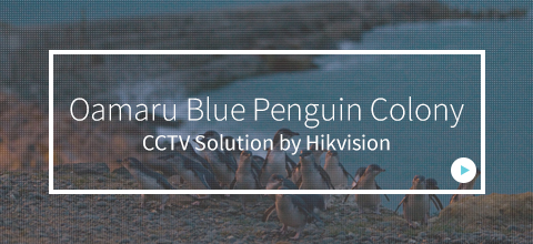 Oamaru Blue Penguin Colony Solutions Banner
